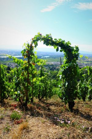 Restaurant Valence vigne